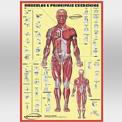 Cartaz de Músculos e Treinamento